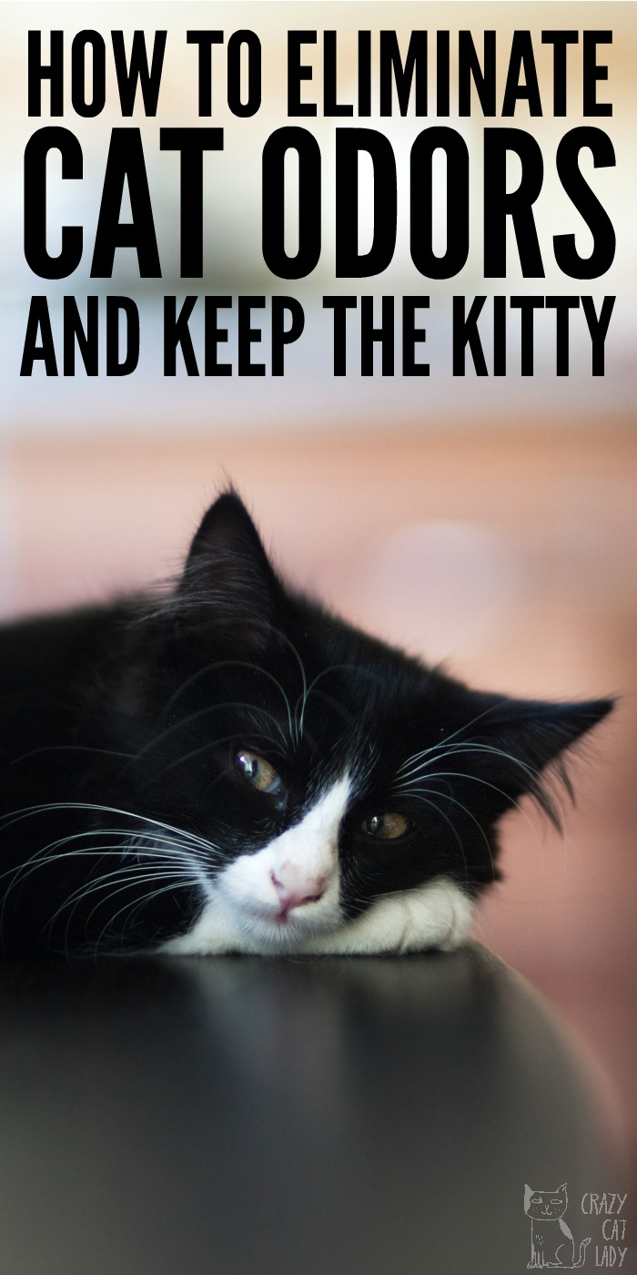 How to Eliminate Cat urine Odors and Keep the Kitty
