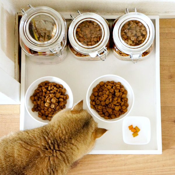Cat Food Tray