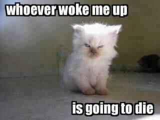 sleepy grumpy cat meme