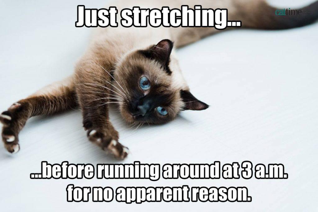 funny cat meme snarky cat memes