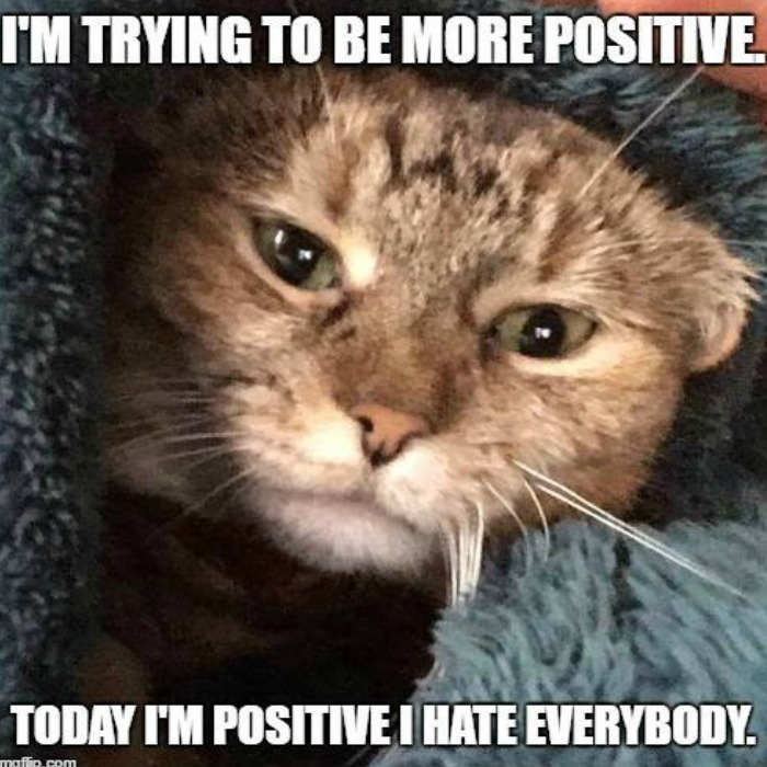Hilariously Snarky Cat Memes That Will Make You Laugh