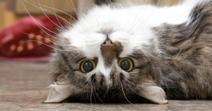 Very Funny Cat Videos To Give You A Laugh or Two - photo#37