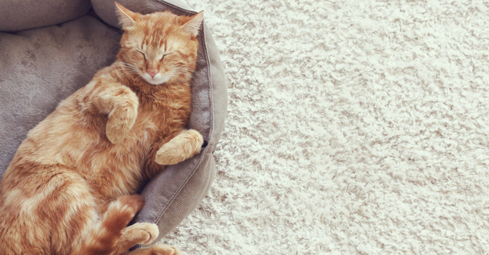 Facts About Orange Tabby Cats pamper your cat