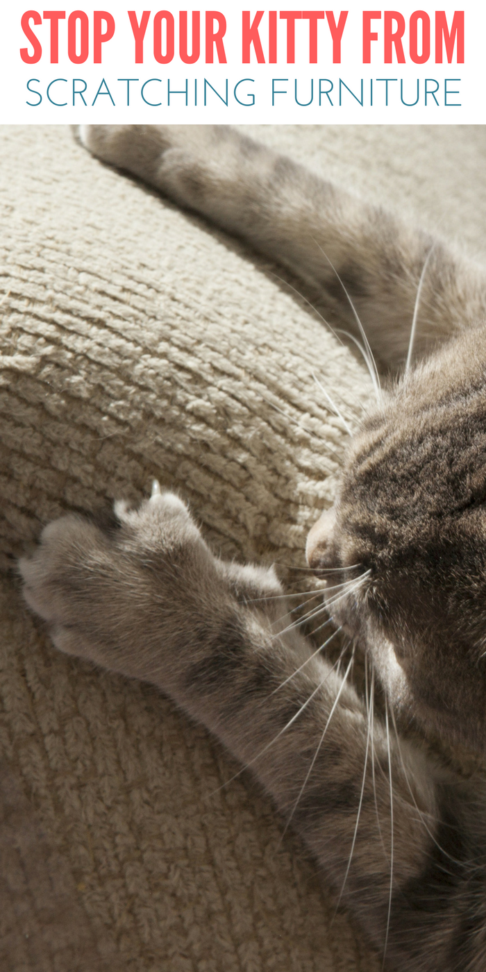 Stop Cats From Scratching on Furniture