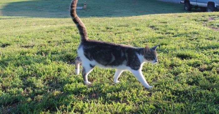 life of farm cats