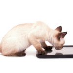 Apps for Your Cat cat app
