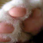 cat paws facts