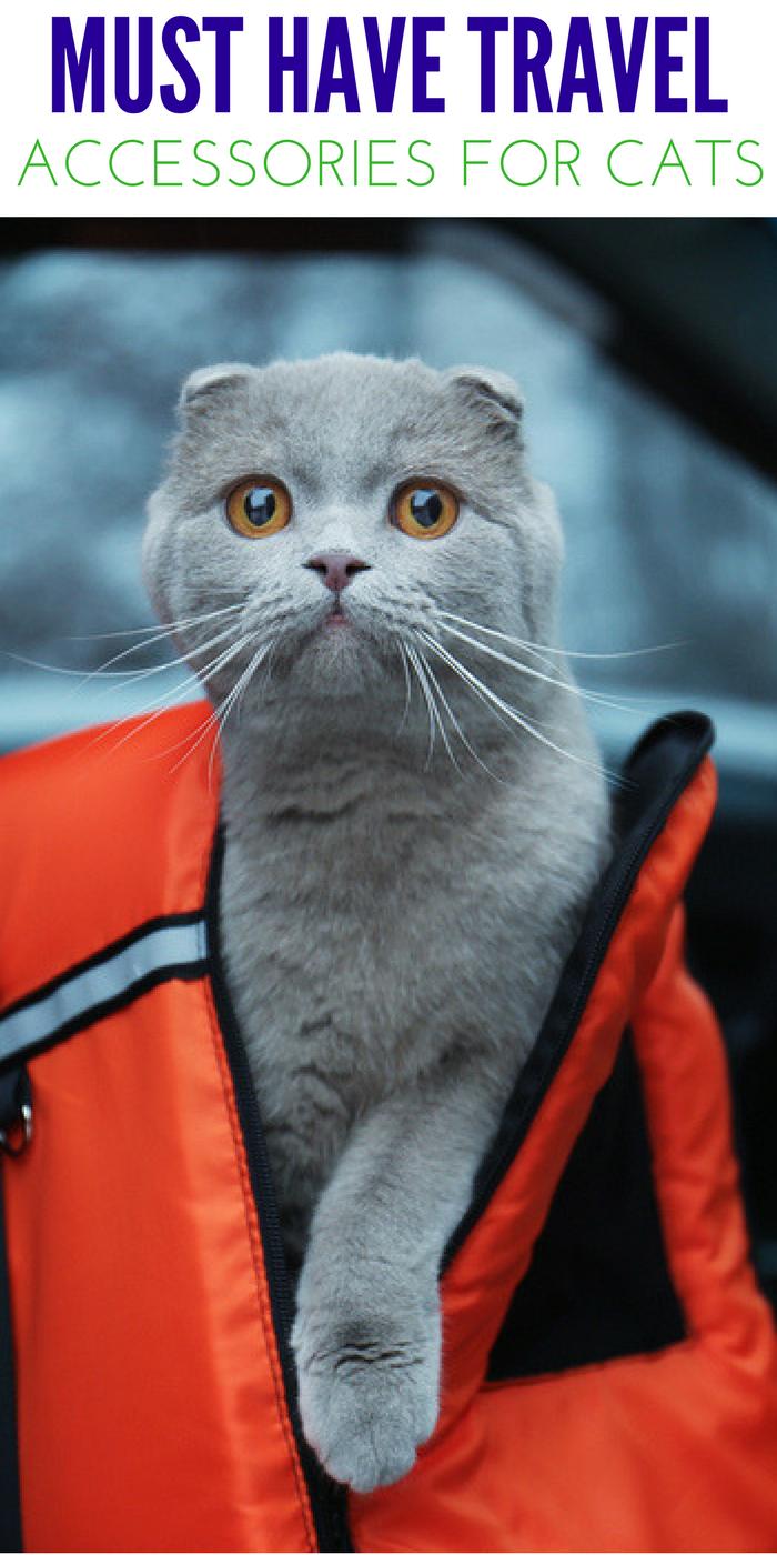 cat travel Accessories
