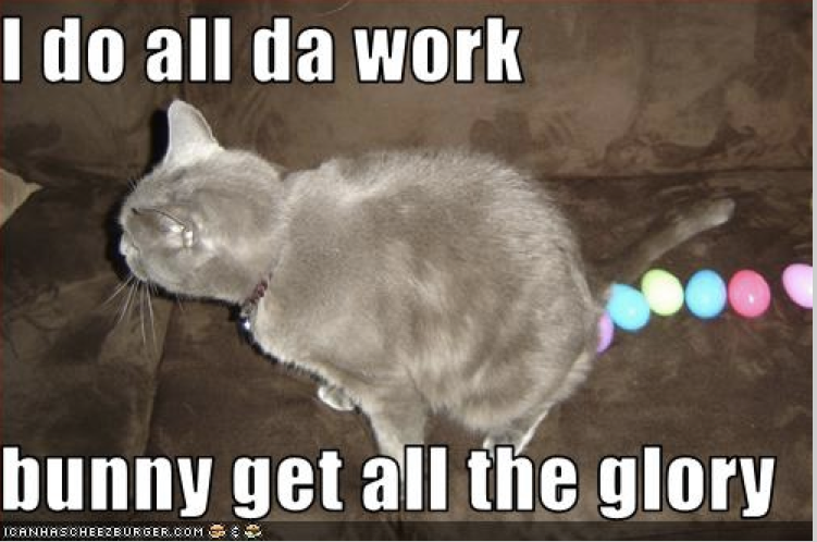 awesome cat memes