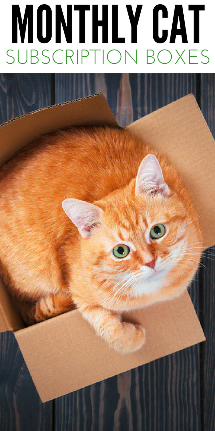 Monthly Cat Subscription Box