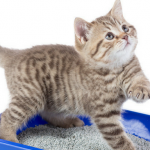 best kitty litter mats