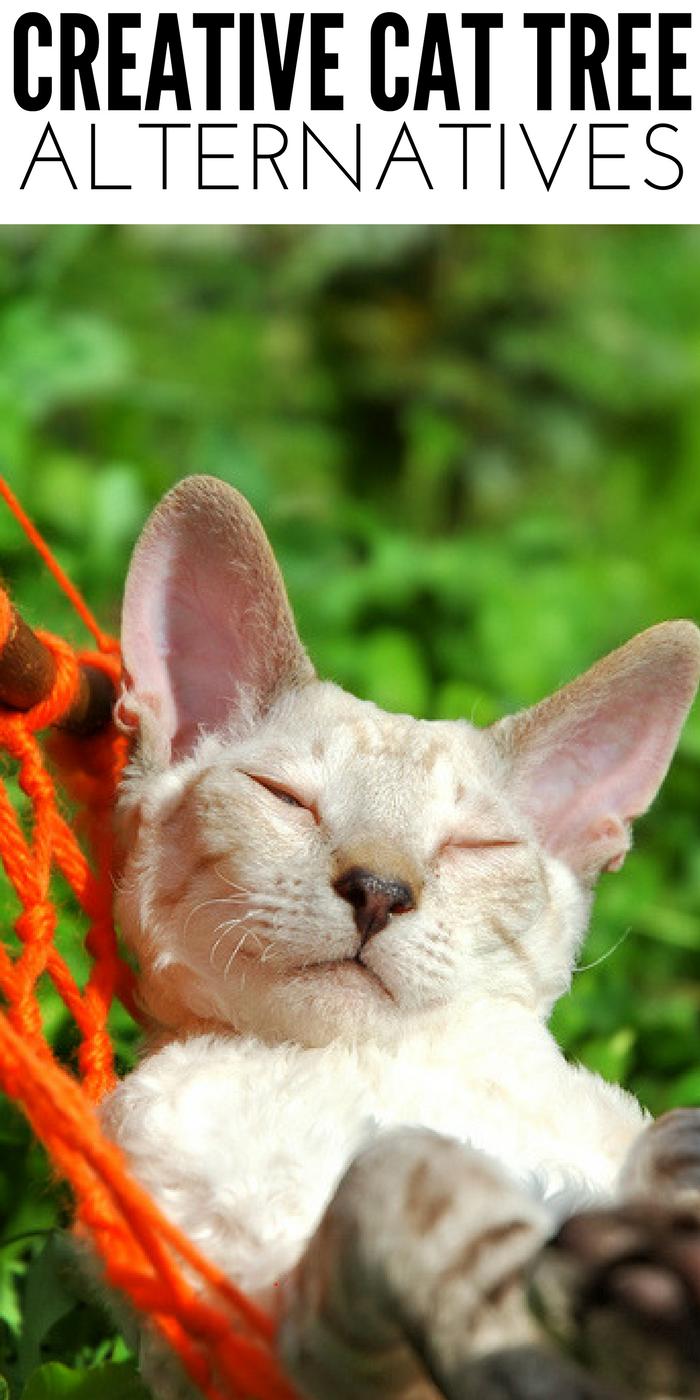 Cat Tree Alternatives