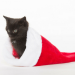 cat Christmas stocking stuffers