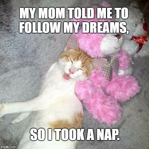 #CrazyCatLady #CatMemes #CatCare hilarious cat memes