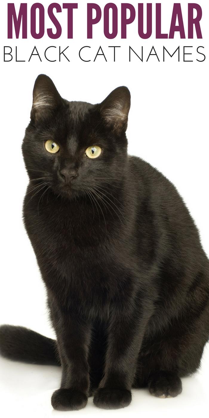 #CrazyCatLady #BlackCatNames #CatLover black cat names