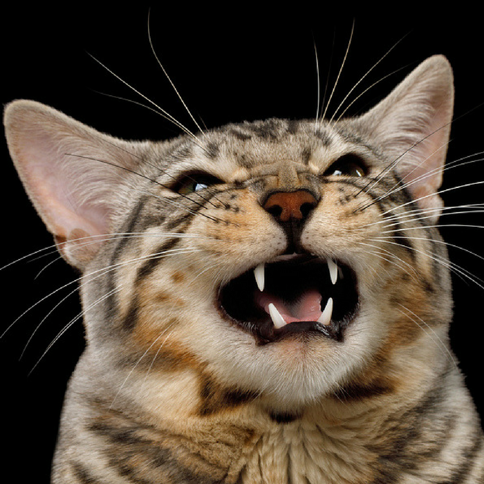 #CrazyCatLady #CatCare #CatHelp cat meowing at night