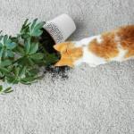 #CrazyCatLady #CatSafety #ToxicPlantsToCats