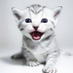 #CrazyCatLady #CatCare #CatLover