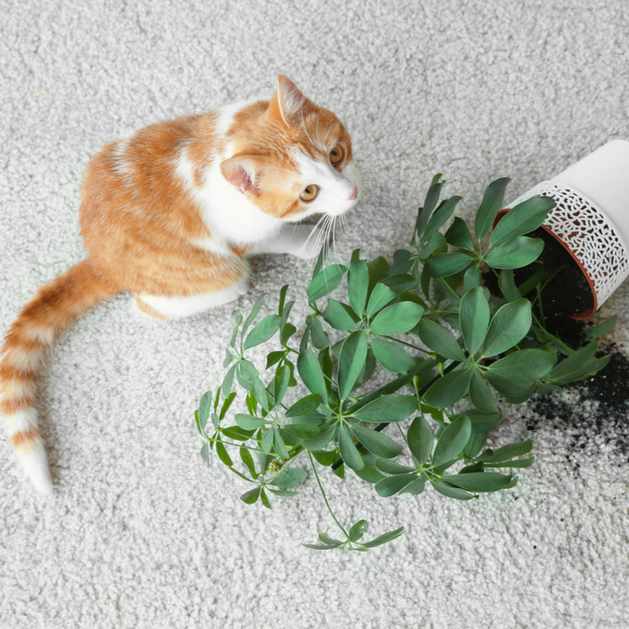 #CrazyCatLady #CatSafety #ToxicPlantsToCats toxic plants to cats