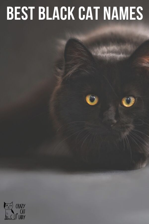 names for your black cat