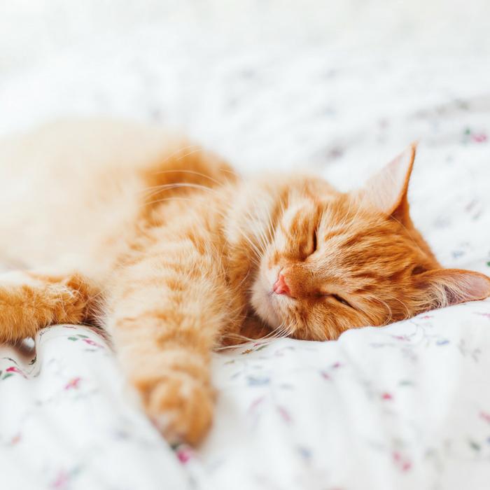#CrazyCatLady #CatLover #CatBedding cat bedding