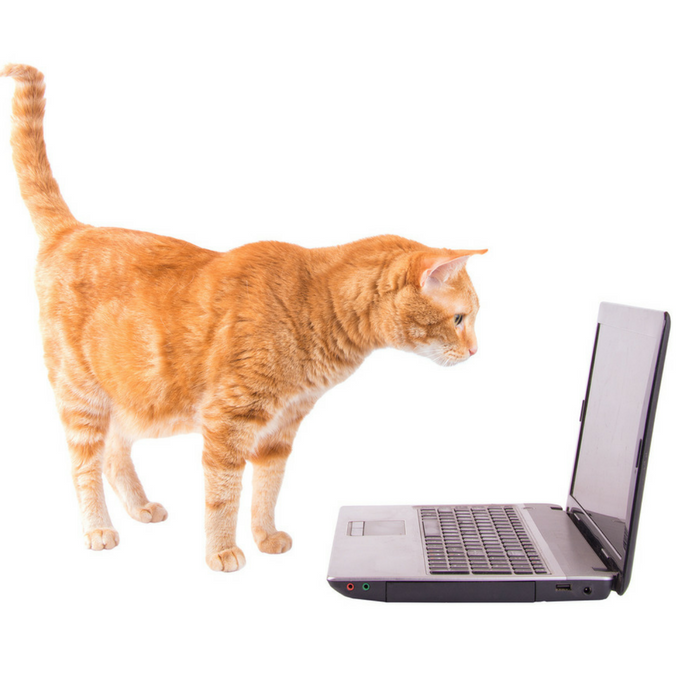 #CrazyCatLady #CatCare #CatEntertainment YouTube videos for cats