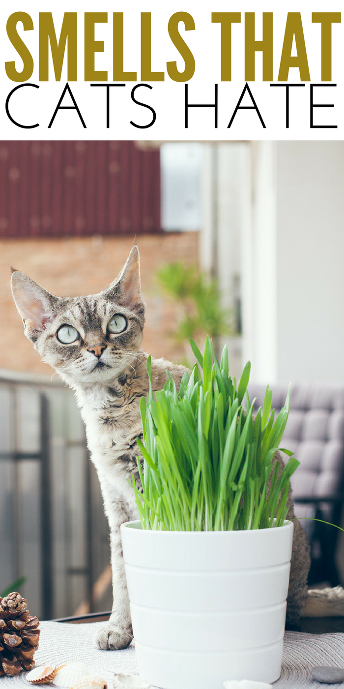 #CrazyCatLady #CatCare #CatFacts smells that cats hate