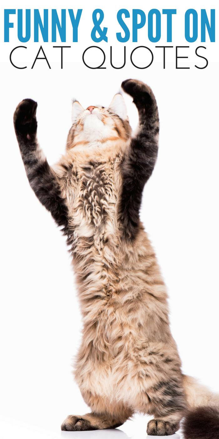 #CrazyCatLady #CatCare #CatQuotes