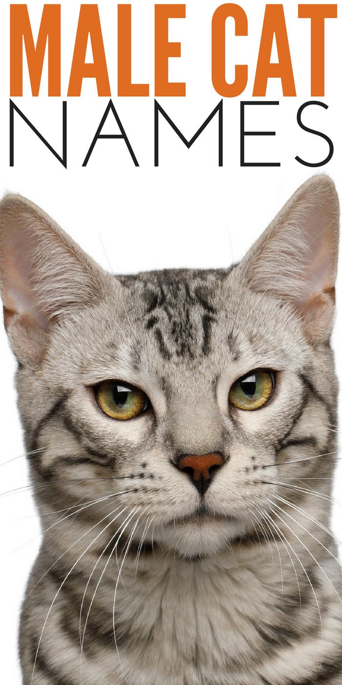 #CrazyCatLady #CatNames #MaleCatNames male cat names