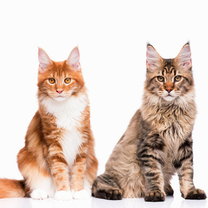 #CrazyCatLady #CatCare #CatQuotes funny cat quotes