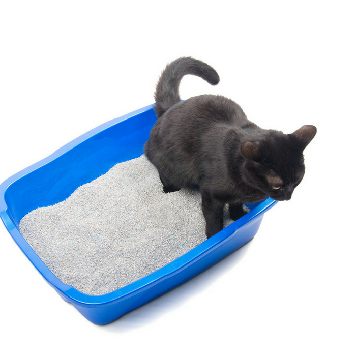 #CrazyCatLady #CatCare #CatLitter best cat litters