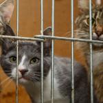 #CrazyCatLady #CatCare #AdoptionOfCat