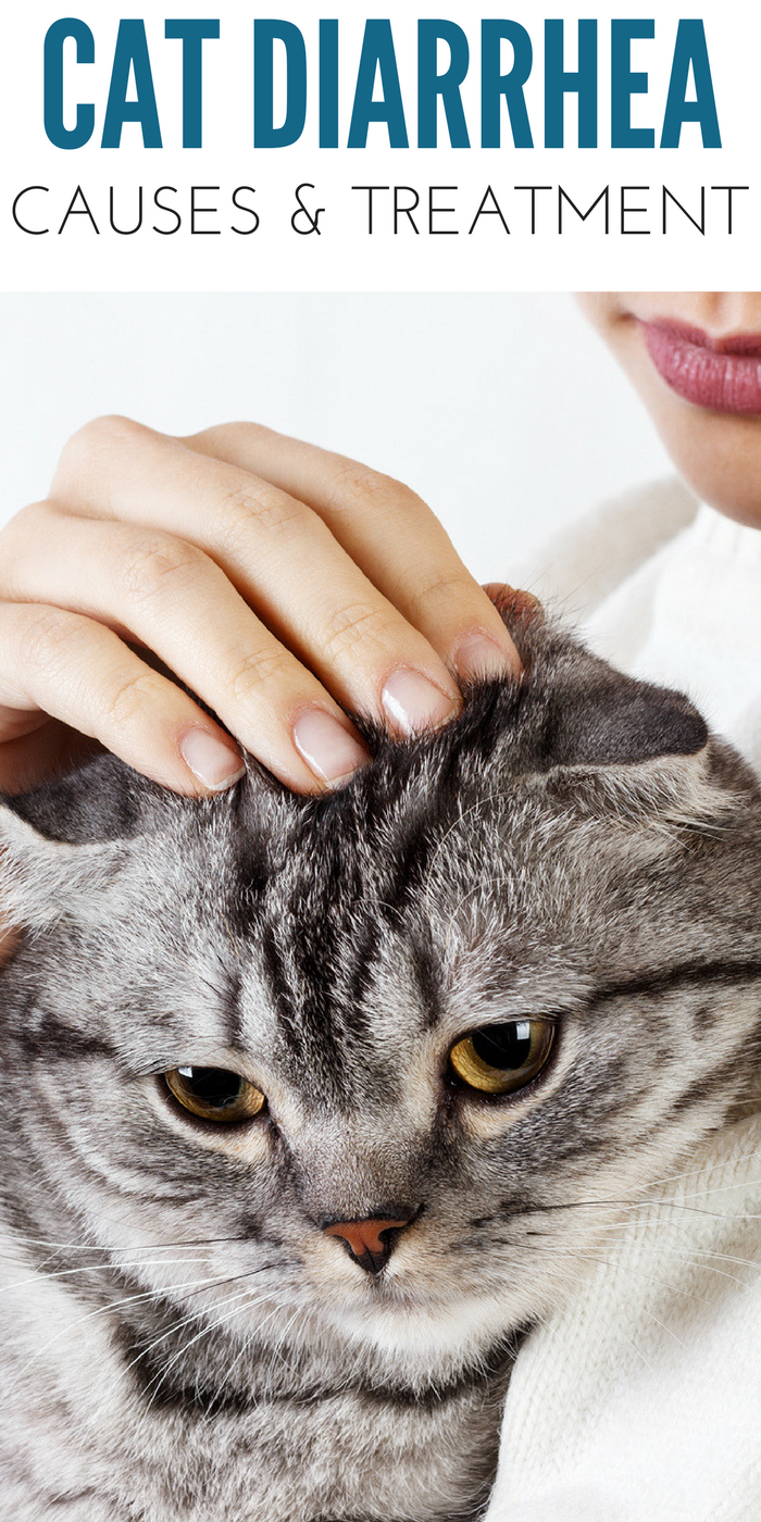 Cat Diarrhea Causes And At Home Treatment Options