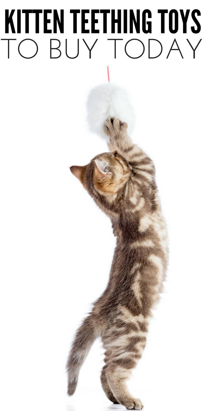 #CrazyCatLady #CatCare #KittenTeething kitten teething toys