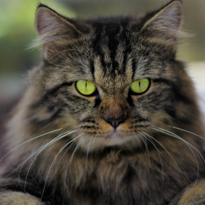 #CrazyCatLady #CatDiarrhea #CatCare cat diarrhea