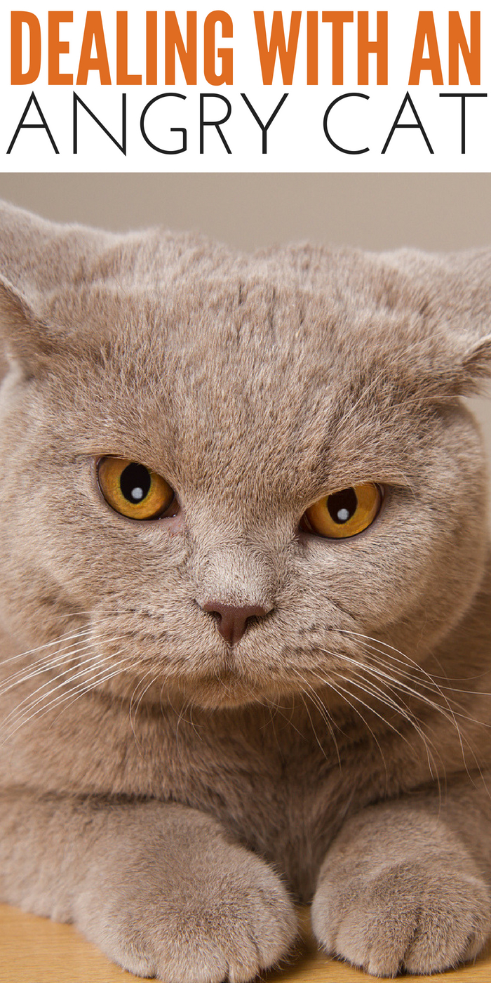 #CrazyCatLady #AngryCat #CatCare angry cat