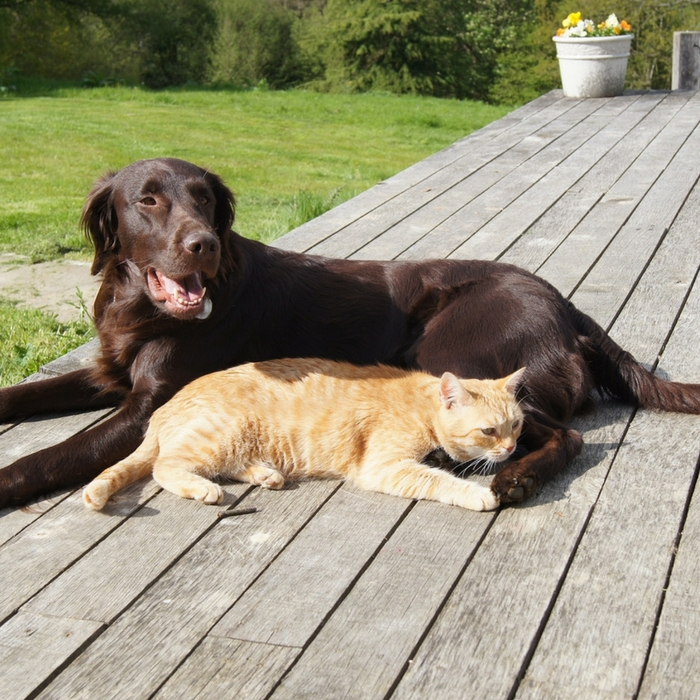 #CrazyCatLady #CatCare #DogandCats best dogs for cats