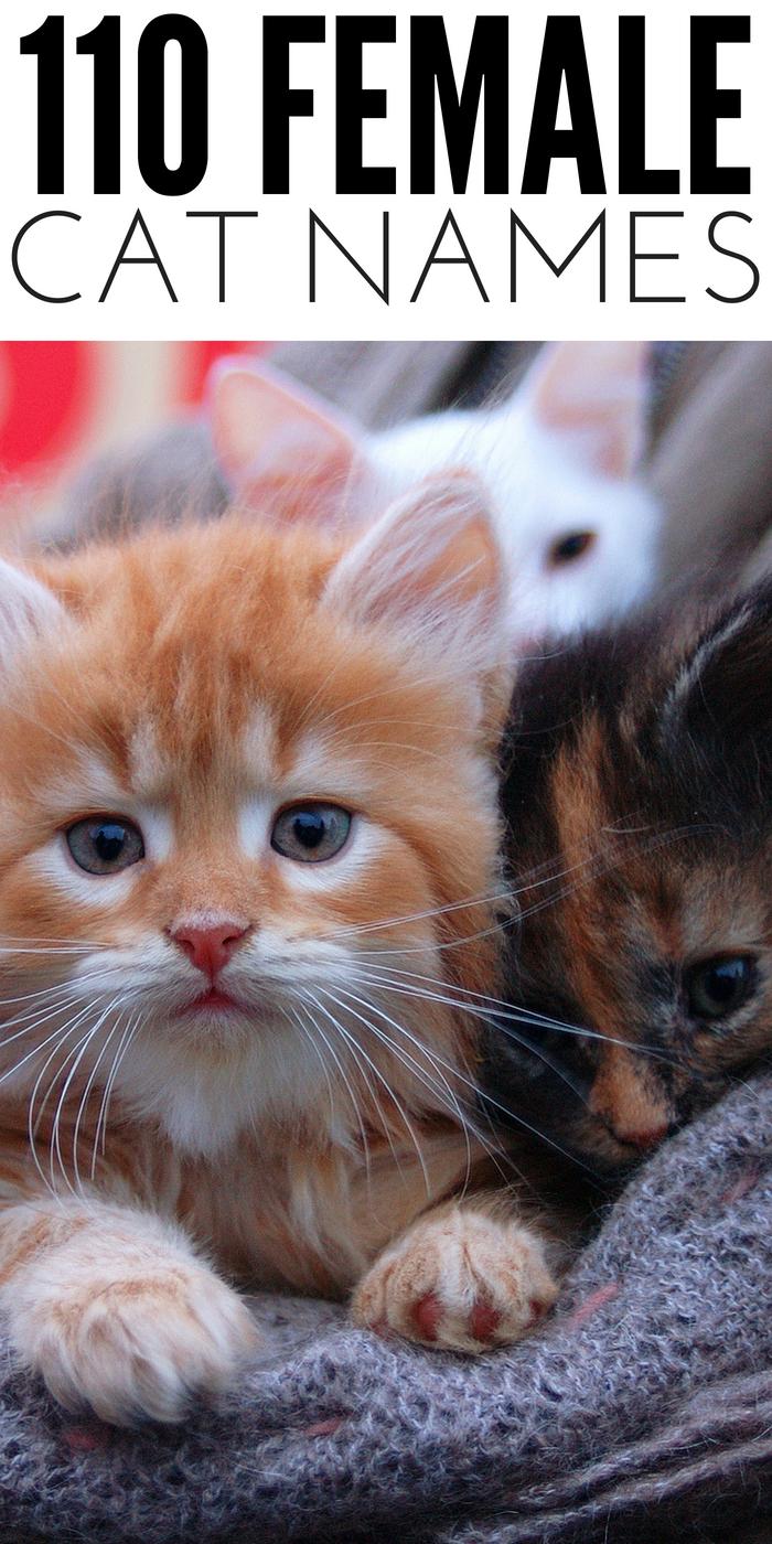 #CrazyCatLady #FemaleCatNames #CatNameIdeas female cat names