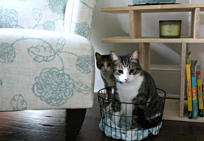 Homemade Cat Treats - Cat Bed Basket - So Easy Being Green