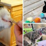 #CrazyCatLady #CatTreats #CatDIY