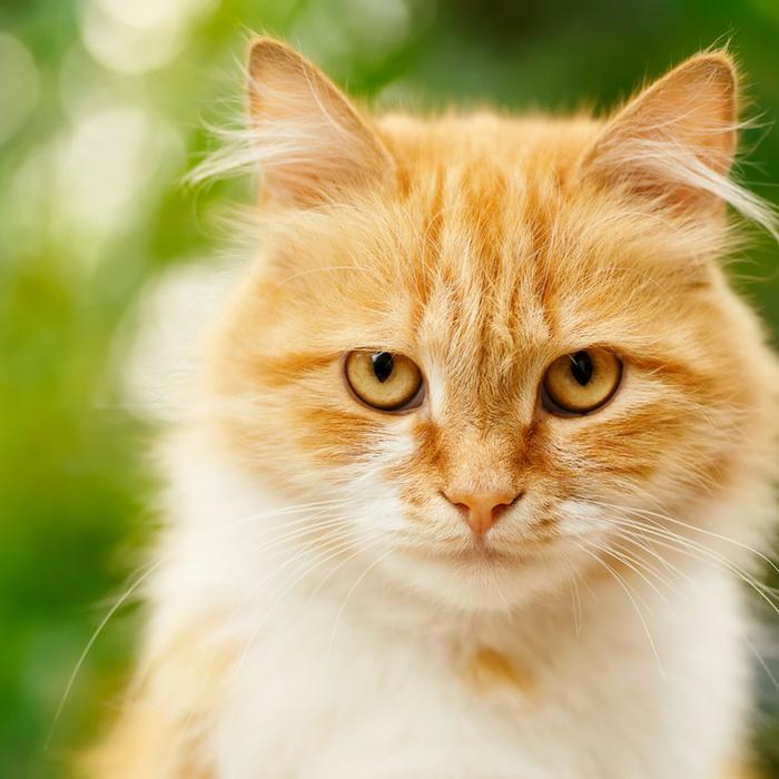 #CrazyCatLady #CatConcussions #CatCare cat concussions