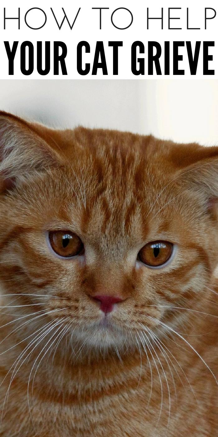 #CatGrief #CrazyCatLady #CatCare cat grieve