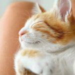 #CrazyCatLady #KittenTraining #CatLover