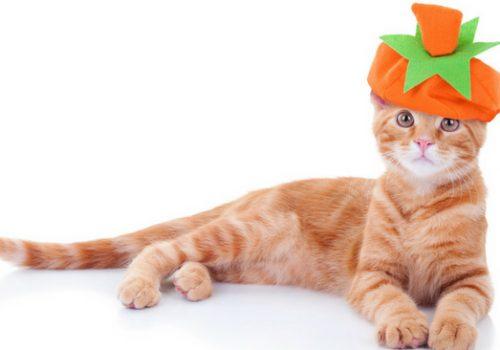 #CrazyCatLady #Halloween #CatCostumes