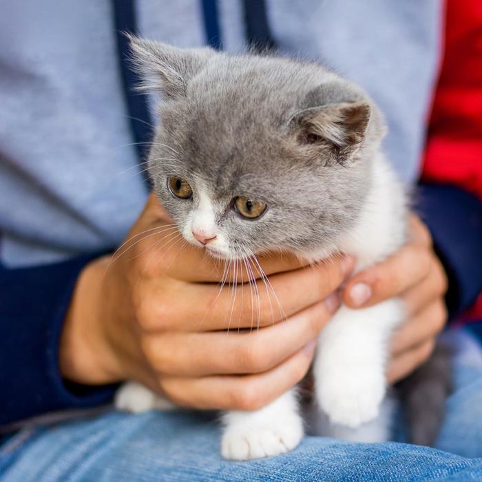 #CrazyCatLady #KittenTraining #CatLover Kitten training Kitten training tricks