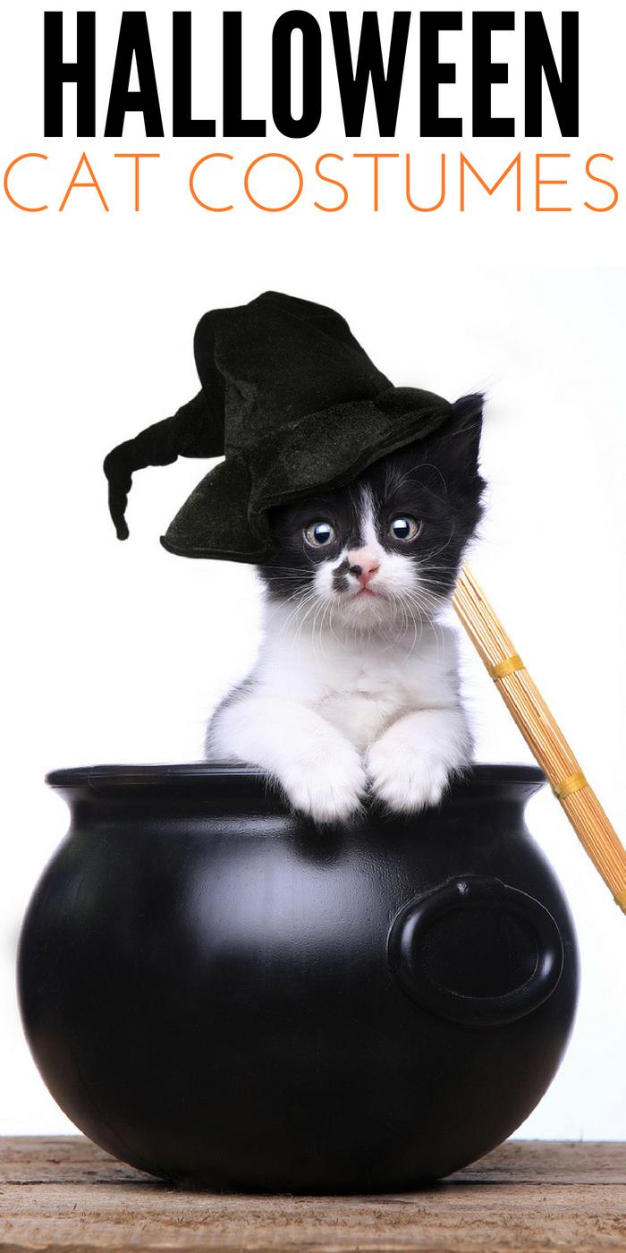 #CrazyCatLady #Halloween #CatCostumes kitty cat costumes
