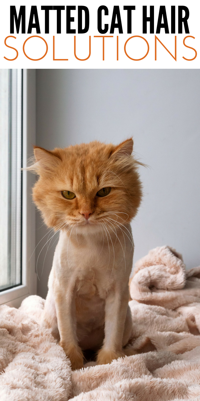 5 Solutions For Tackling Matted Cat Hair | At Home Remedies