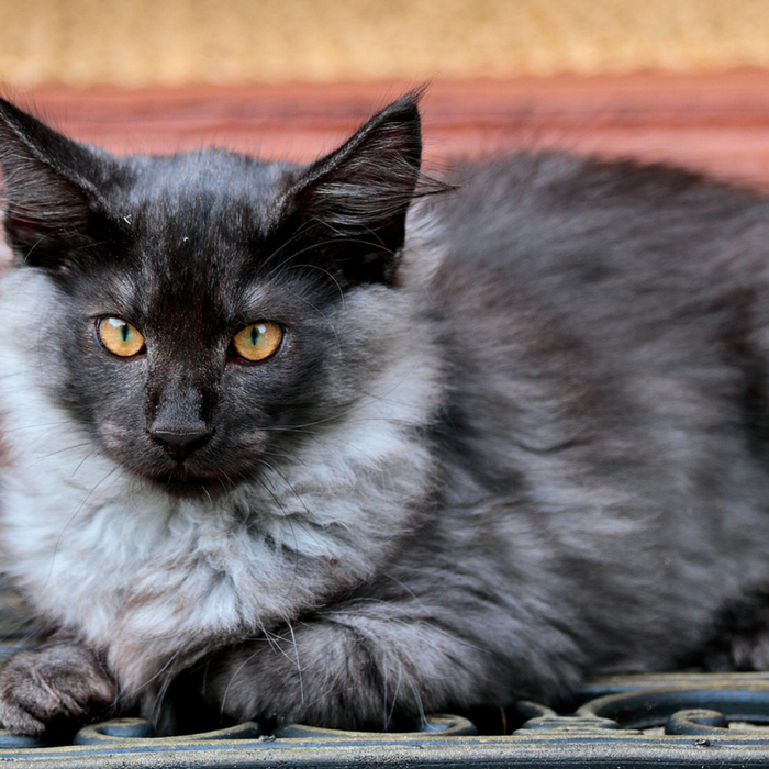 #mattedcathair #CrazyCatLady #CatCare matted cat hair