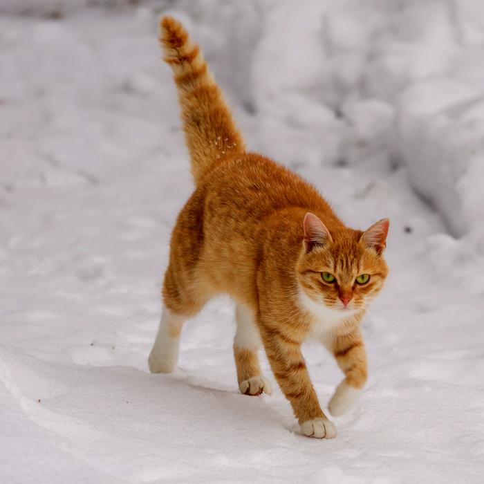 #CrazyCatLady #CatShelter #FeralCat