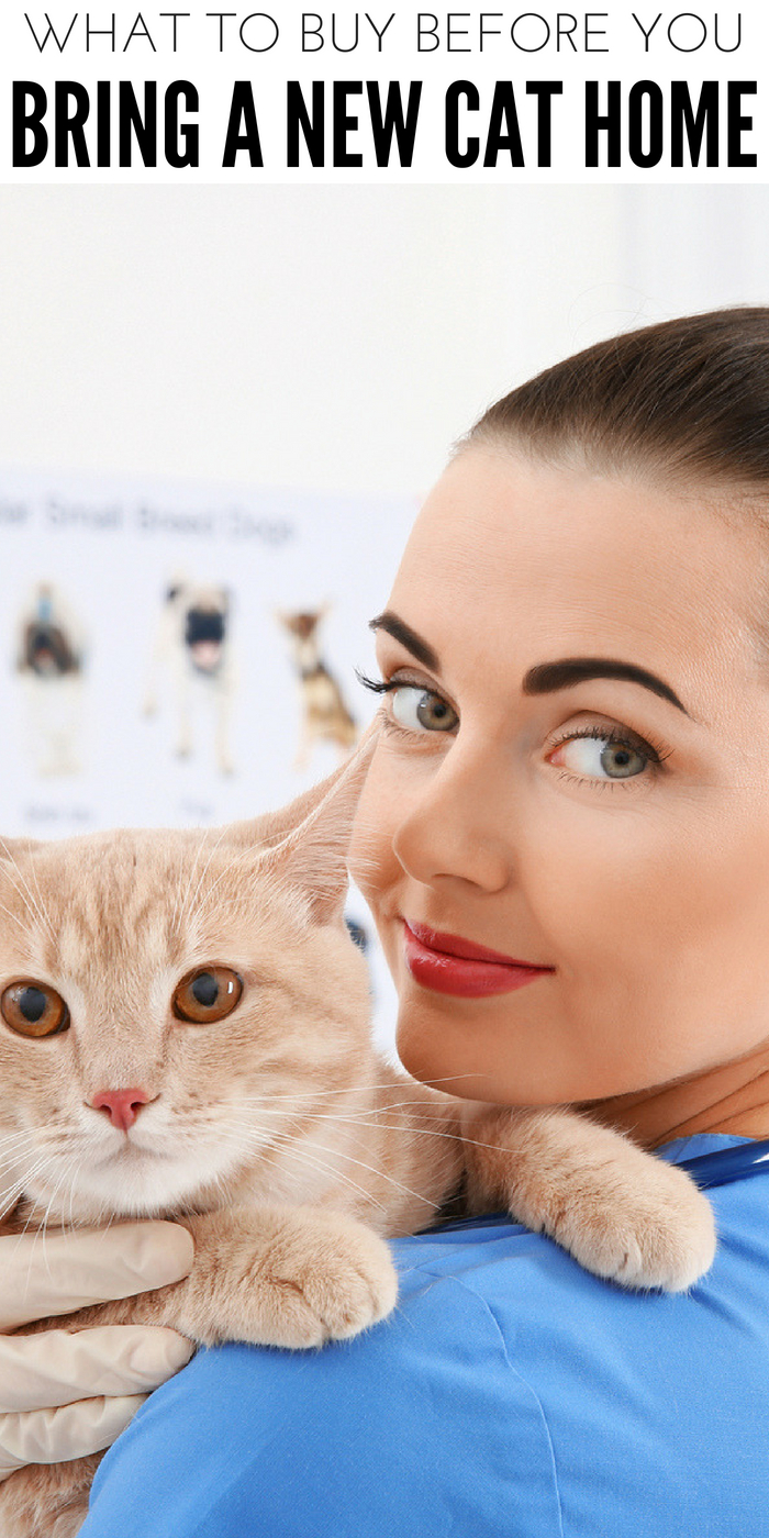 #CrazyCatLady #CatLover #NewCat new cat